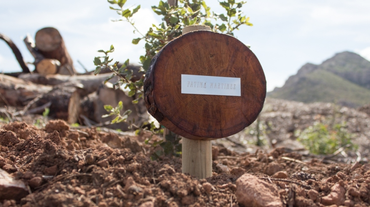 foto de mi árbol en Palma de Mallorca