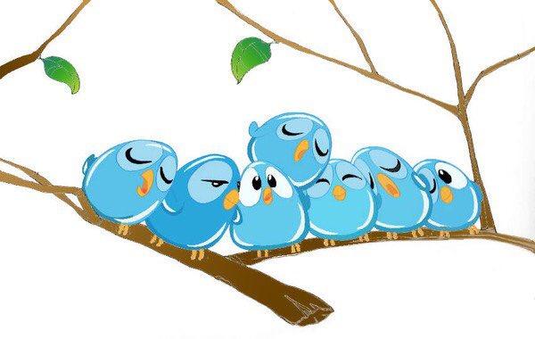 pajarito Twitter