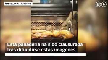 ratas garnier